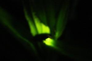 蛍の不思議な灯り