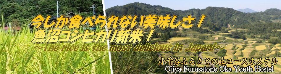 今しか食べられない美味しさ! 魚沼コシヒカリ新米!