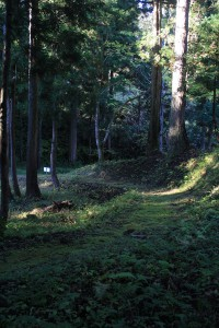 鬱蒼とした森の道