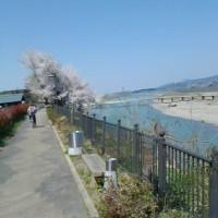 4月・桜の花咲く堤防道路