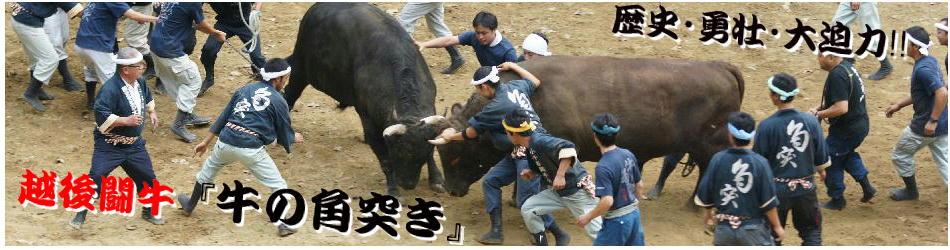 牛の角突きヘッダー