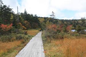 171003-1038紅葉と木道