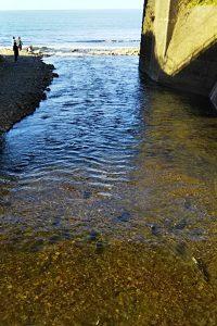 河口から登ってくる鮭の魚群